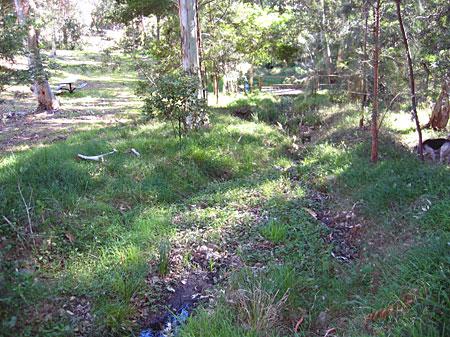 Grasses along creek line