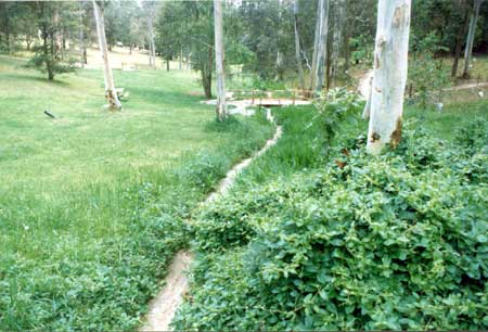 Weeds along creek in parkland