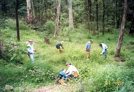 Bushcare volunteers at work
